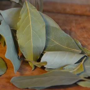 laurel planta aromática